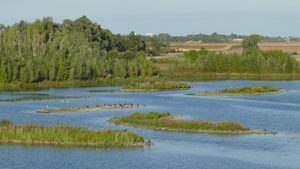 zones humides_carriere_reserve_Marolles